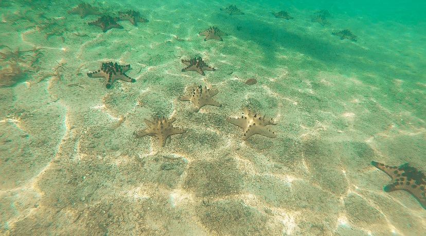 Starfish Vanuatu