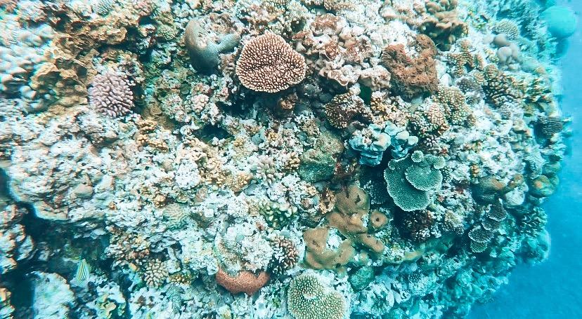 Snorkelling Vanuatu
